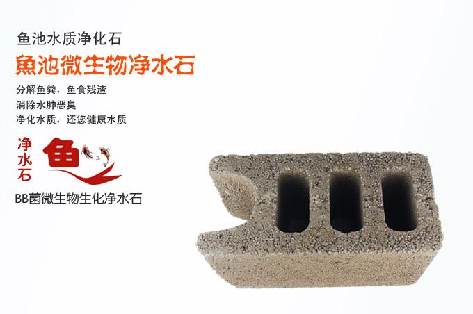 简单高效的锦鲤鱼池水质净化方法