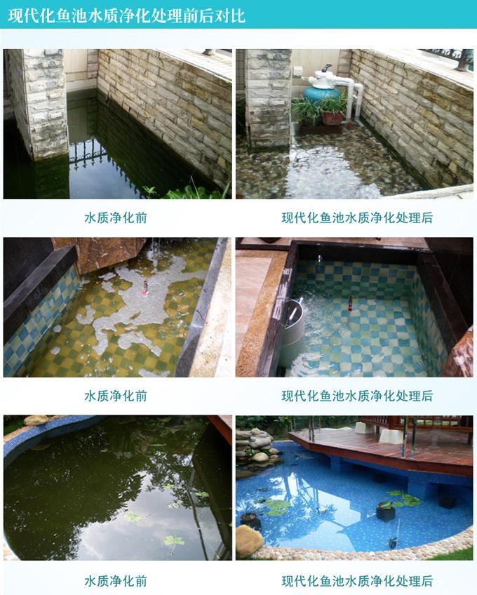 安装循环系统的鱼池水质清澈